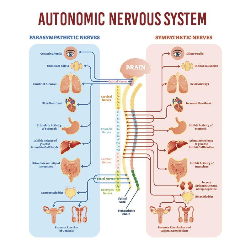 autonomic nervous system test