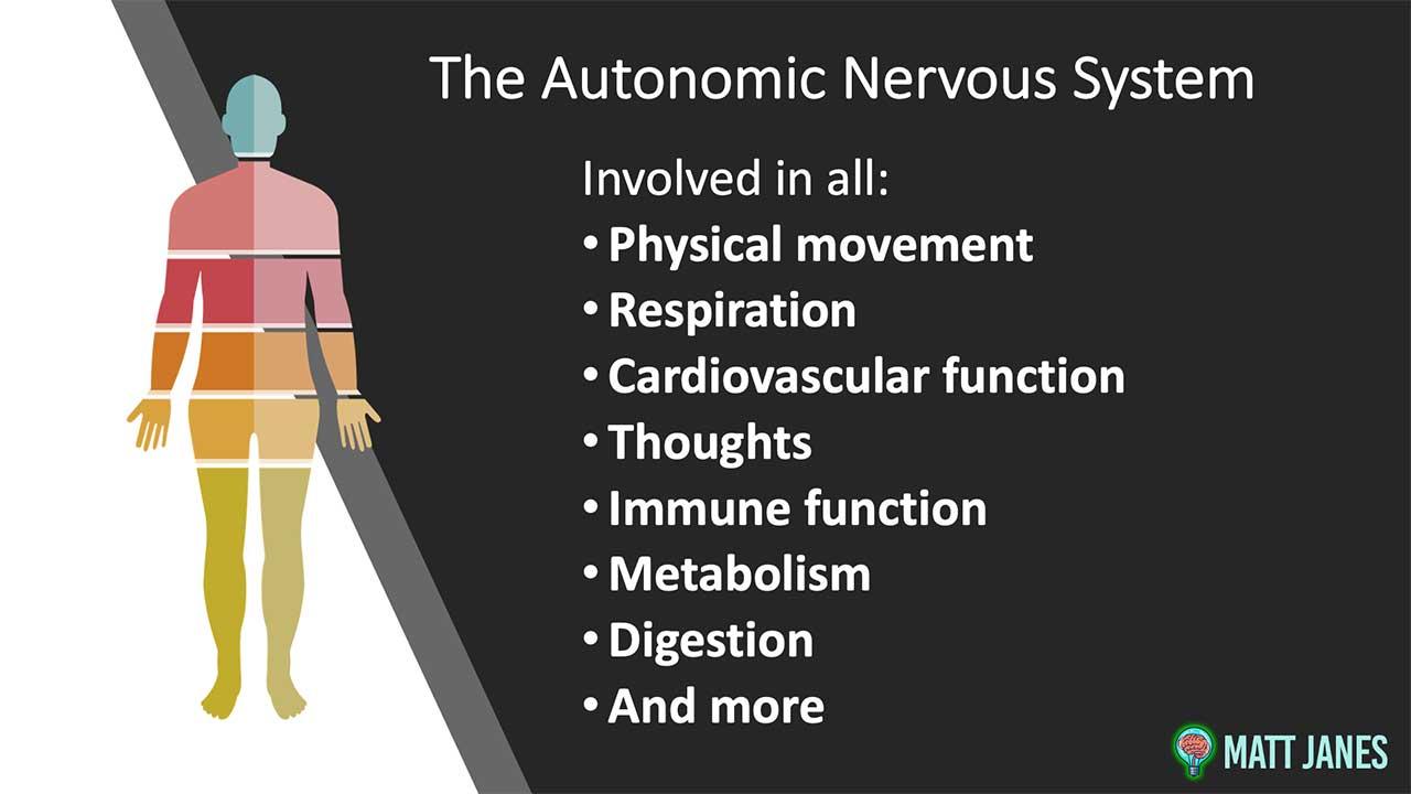 role of the autonomic nervous system
